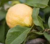 Jacquelinen-lemonade-apukokki-maailmalla-6471
